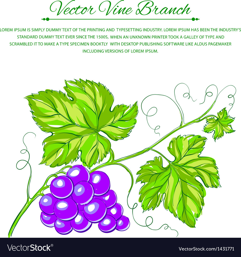 Card with grape leaves vector | Price: 1 Credit (USD $1)