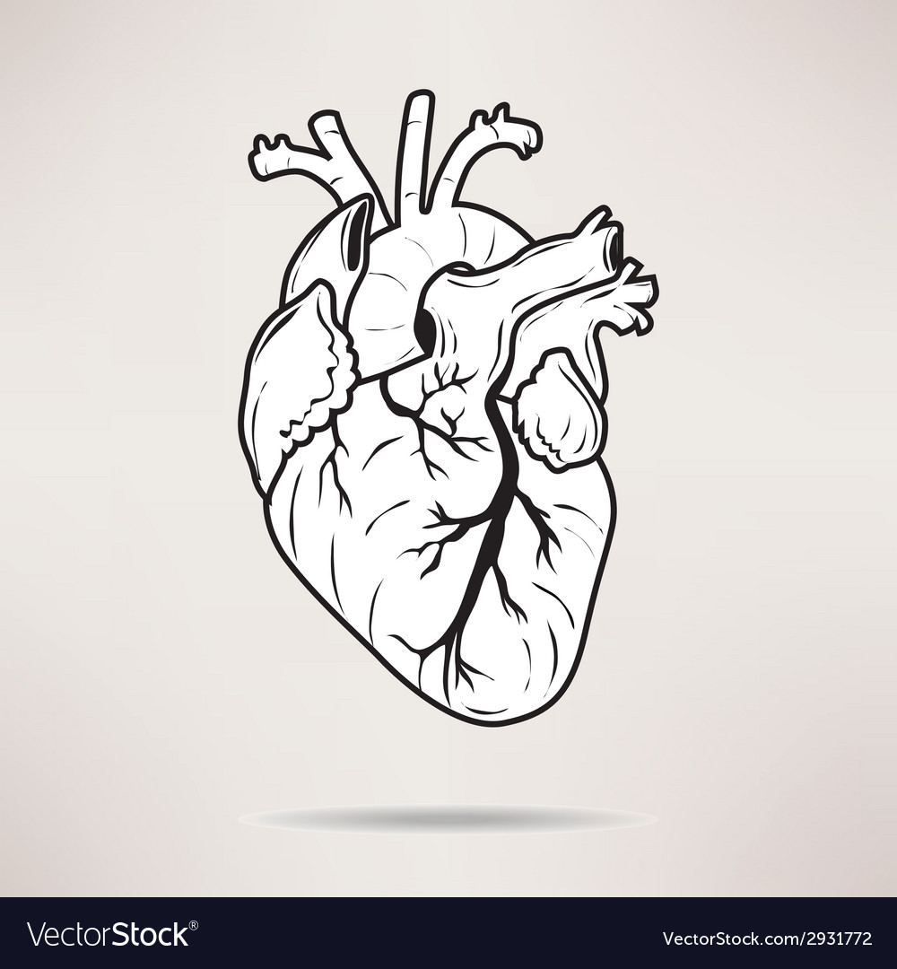 Icon body heart icon on the white background vector | Price: 1 Credit (USD $1)