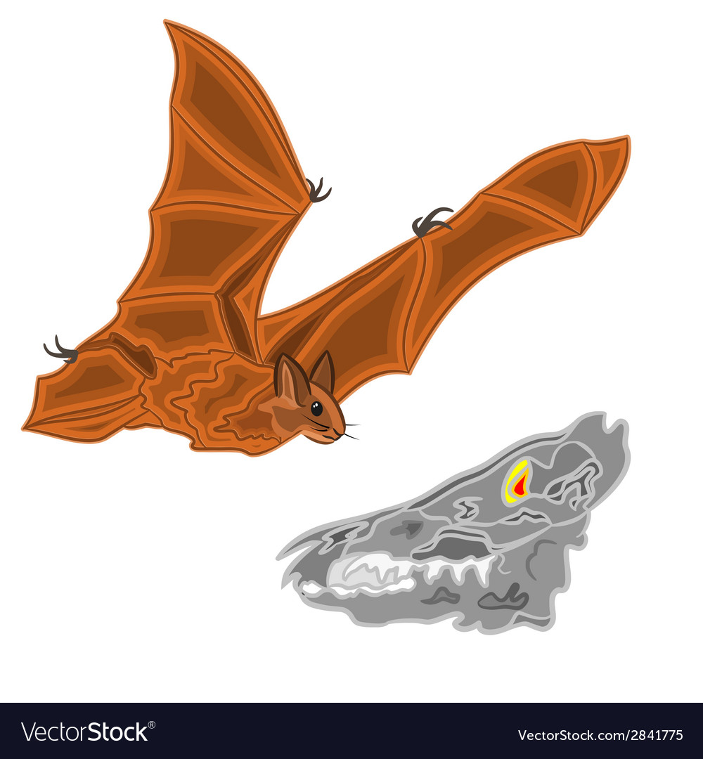 Halloween bat and skull vector | Price: 1 Credit (USD $1)