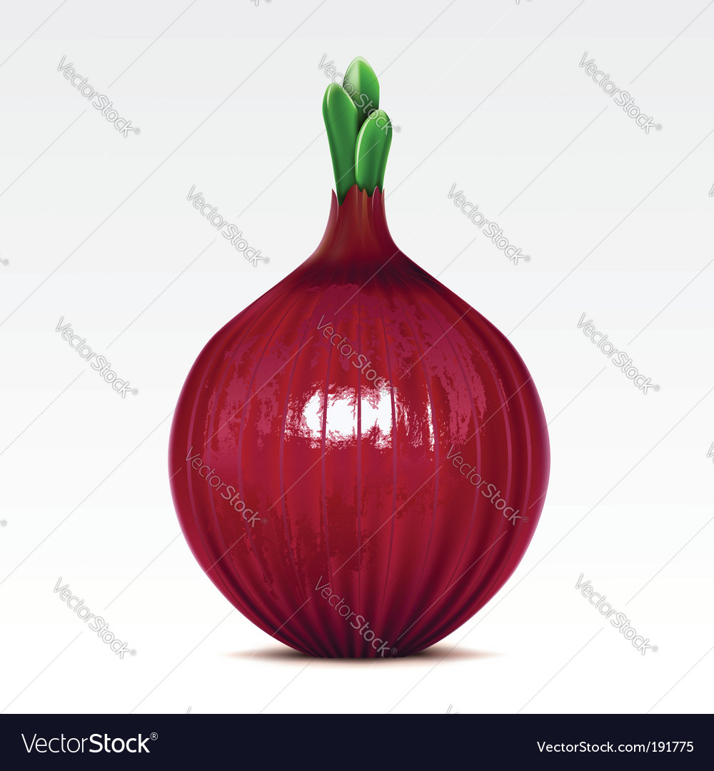Onion vector | Price: 1 Credit (USD $1)