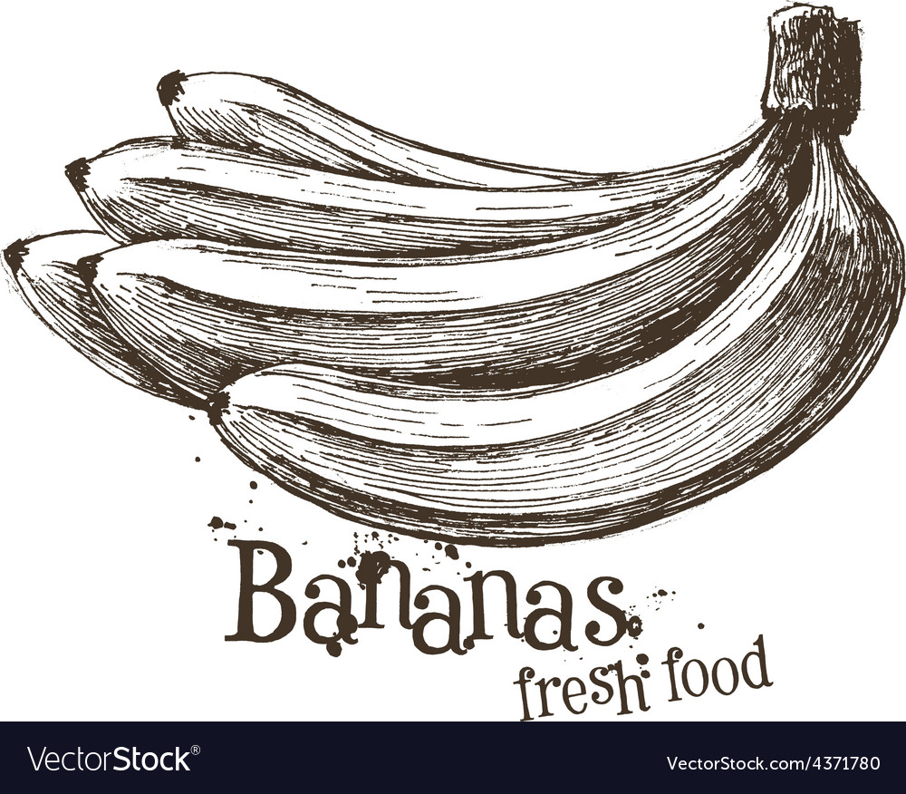 Bananas logo design template fruit or food vector
