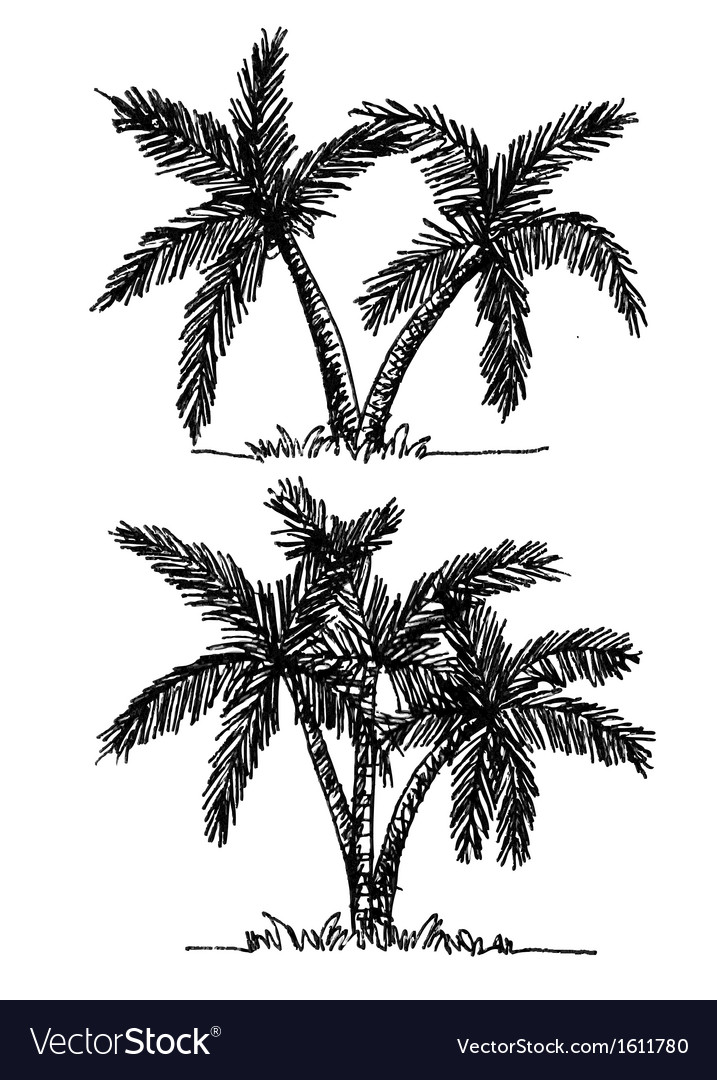 Palm tree tropical palm trees black silhouettes b vector   Price: 1 Credit (USD $1)