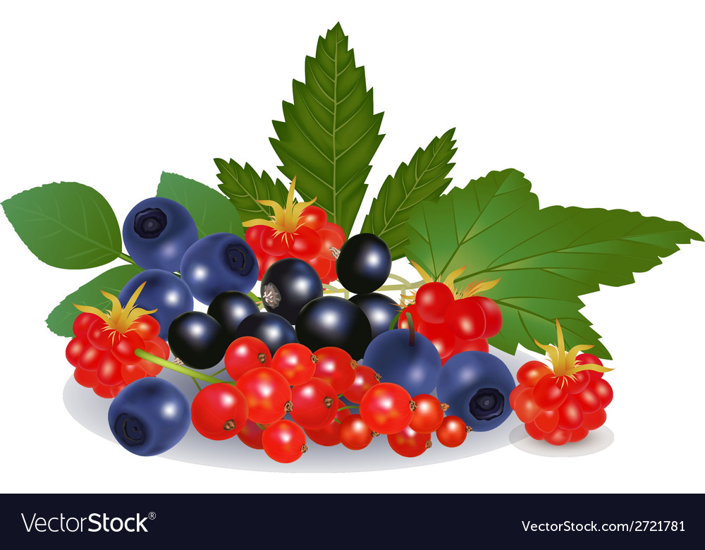 Forest berries vector | Price: 1 Credit (USD $1)