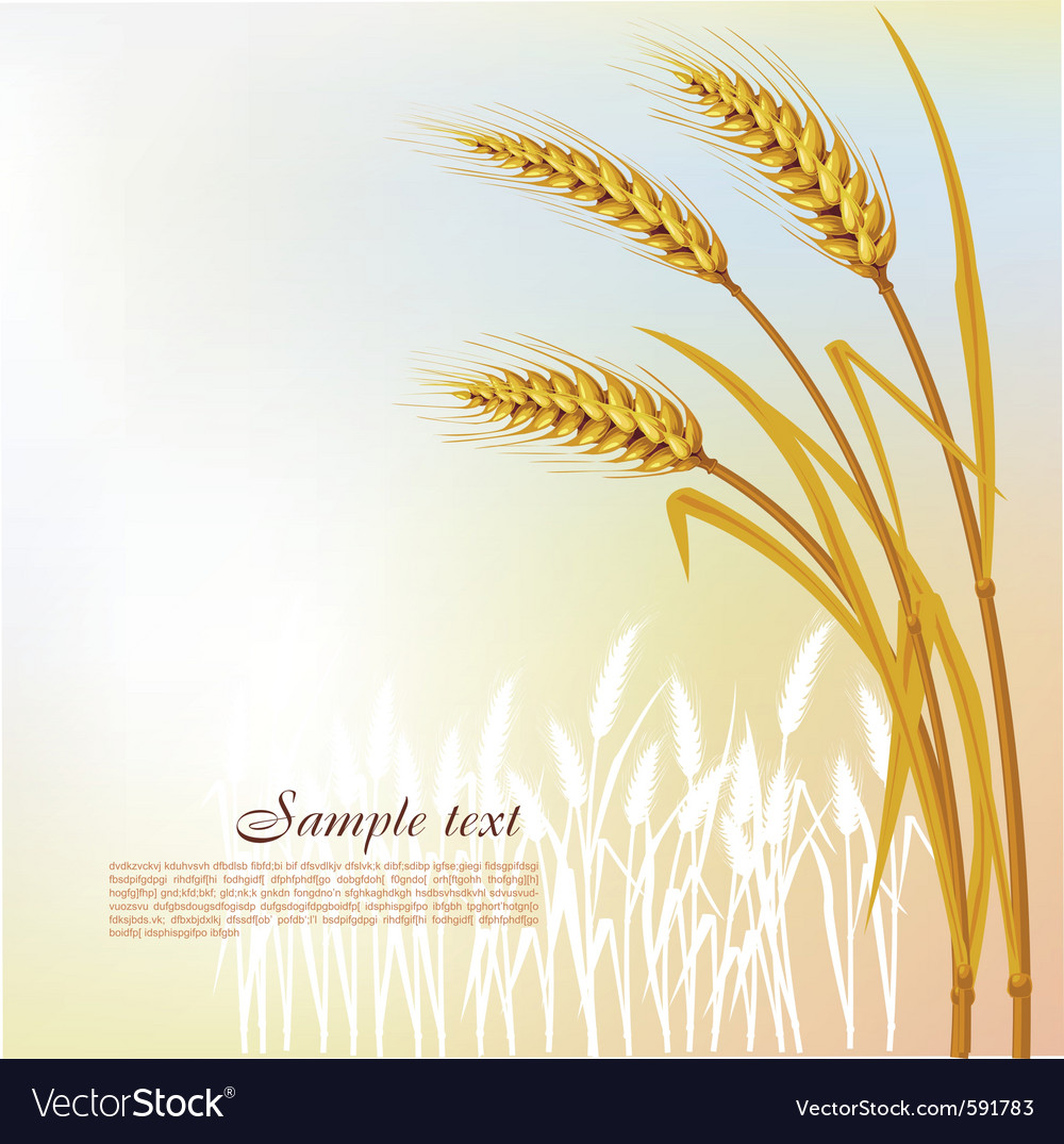 Background with wheat vector | Price: 3 Credit (USD $3)