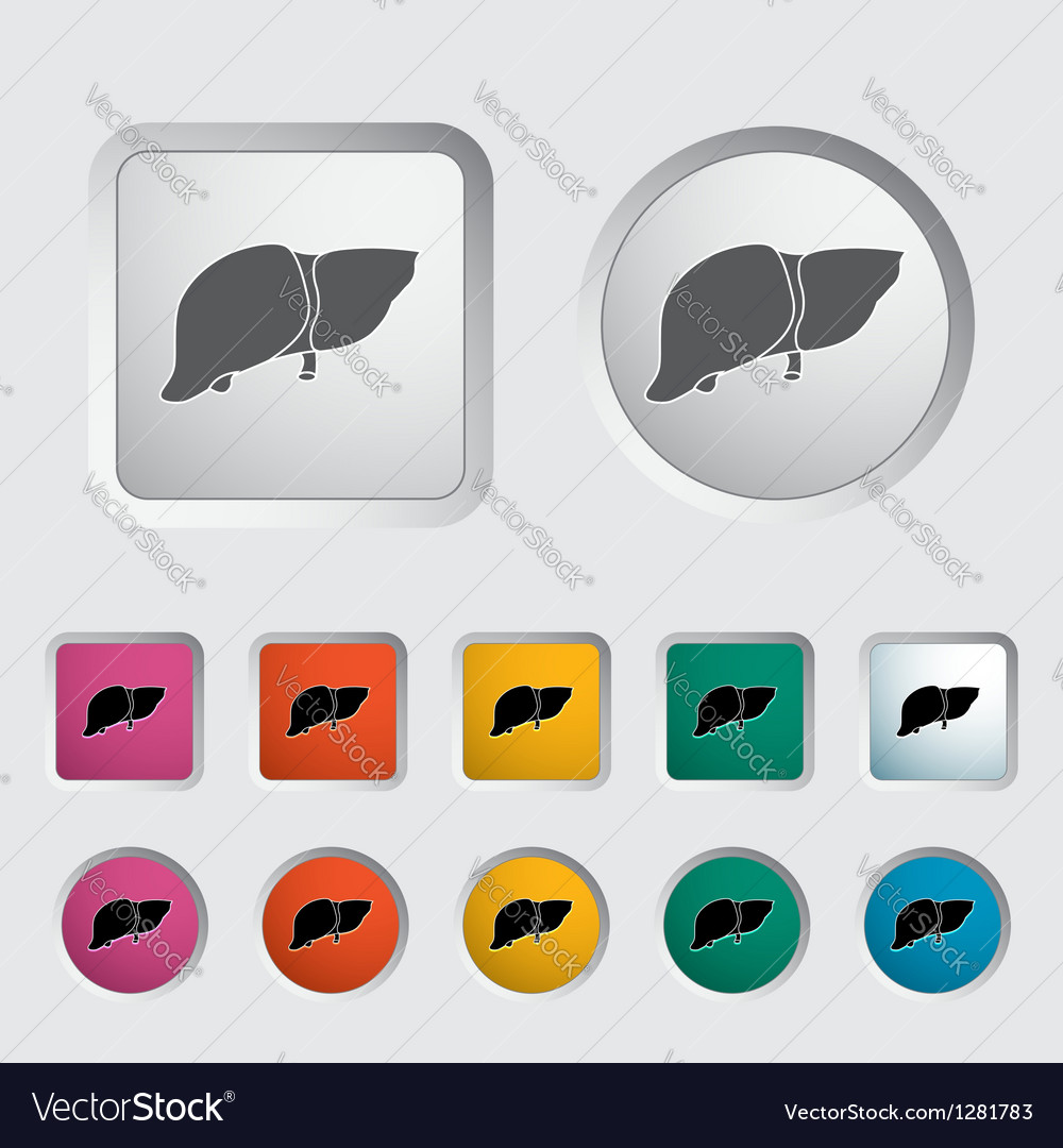 Liver vector | Price: 1 Credit (USD $1)