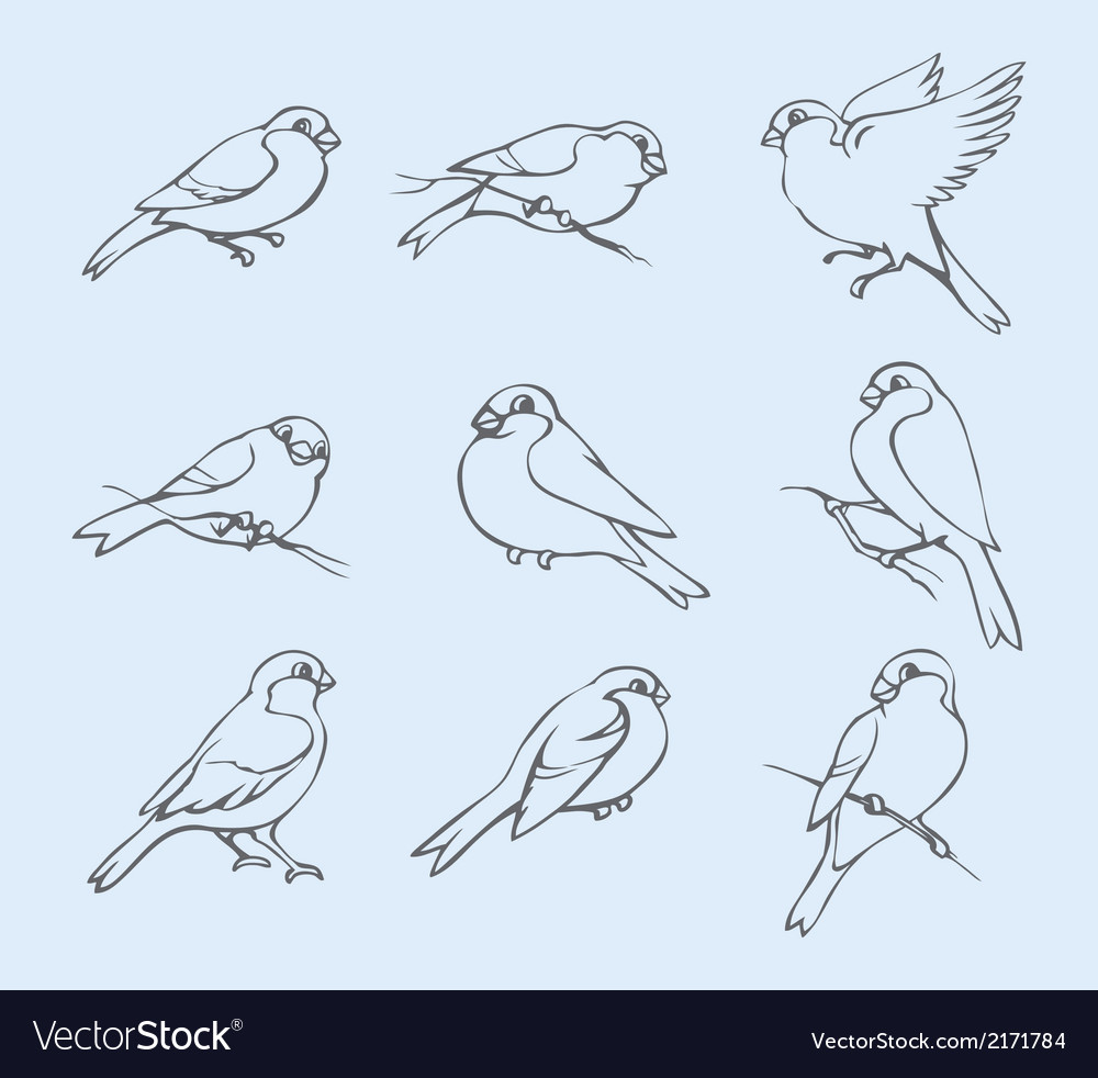 Little tits sparrows and bullfinches vector | Price: 1 Credit (USD $1)
