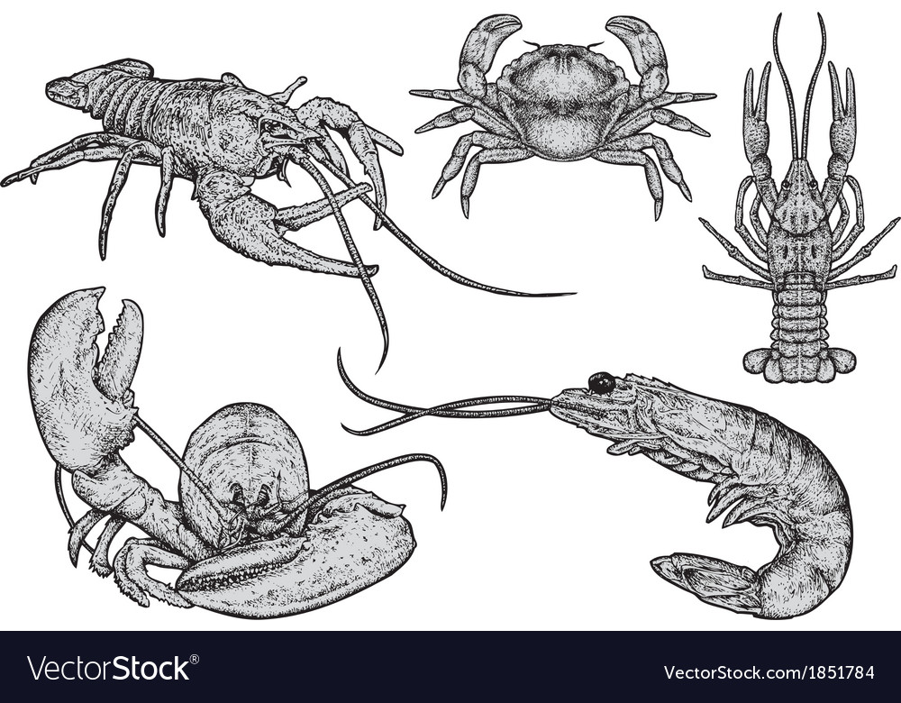 Shellfish - hand drawn vector | Price: 1 Credit (USD $1)