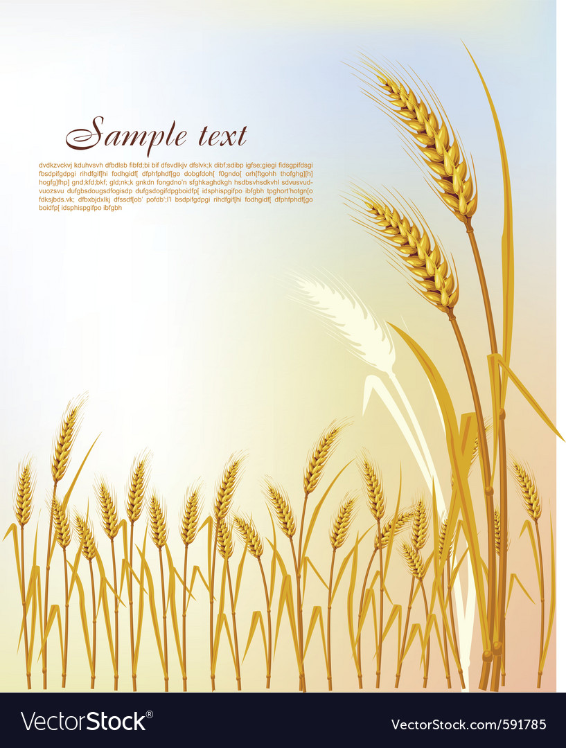 Background with wheat vector | Price: 1 Credit (USD $1)