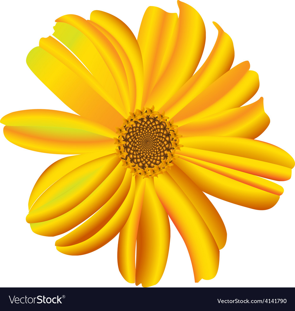 A single daisy flower vector