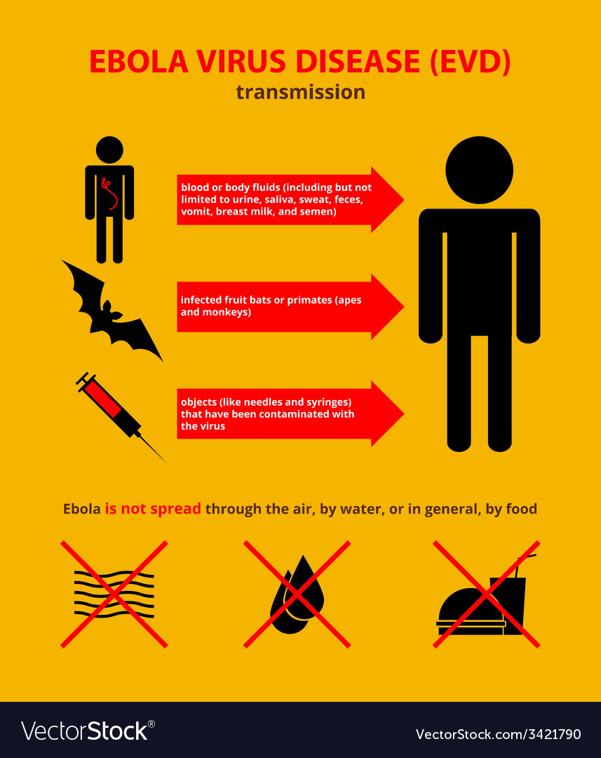 Ebola transmission infographic vector | Price: 1 Credit (USD $1)