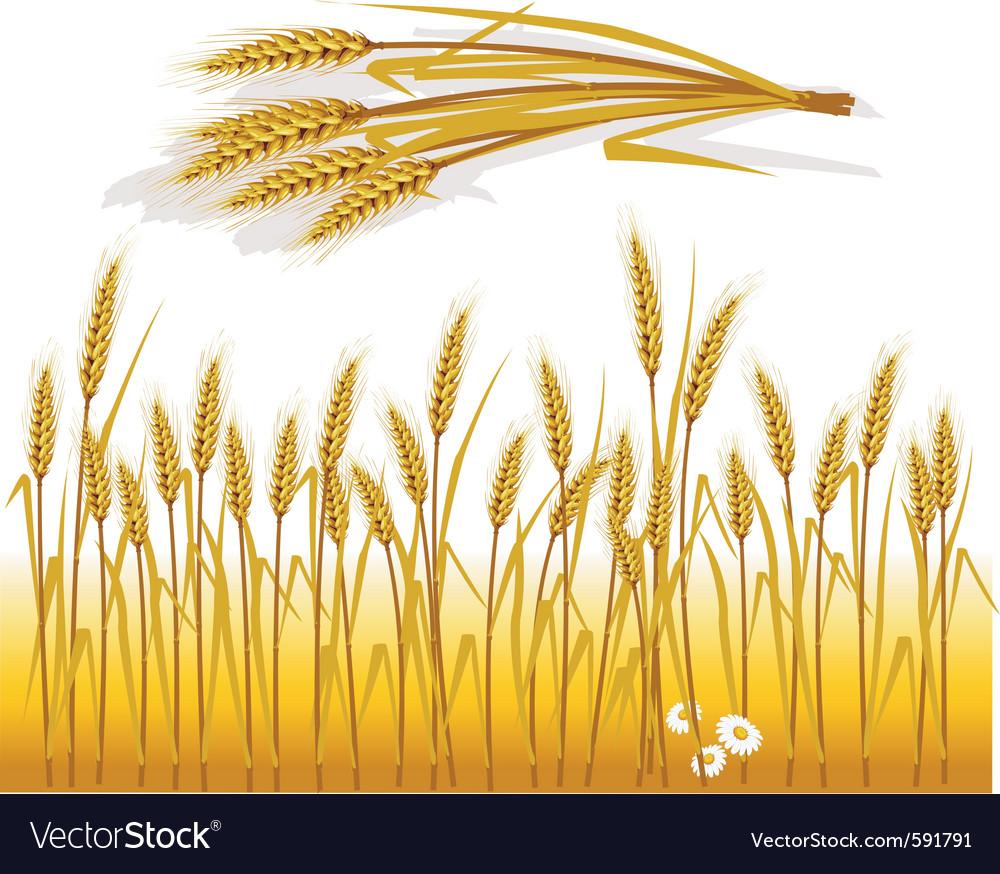 Wheat field vector | Price: 1 Credit (USD $1)