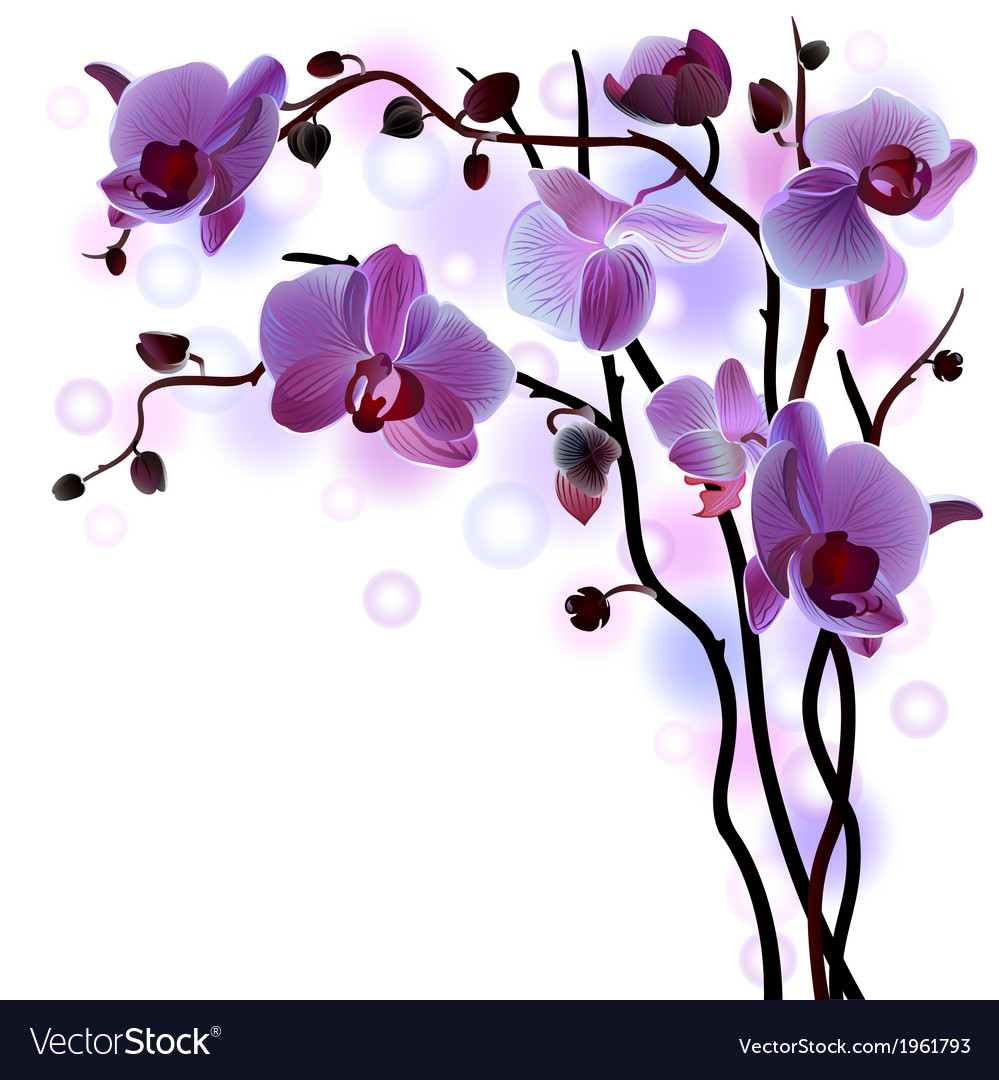 Branch of violet orchids vector | Price: 1 Credit (USD $1)