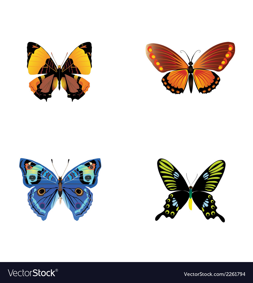 Colorful butterfly download vector | Price: 1 Credit (USD $1)