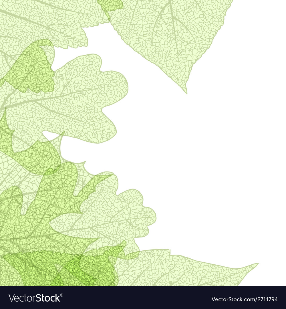 Leaf skeletons autumn tenplate eps 10 vector   Price: 1 Credit (USD $1)