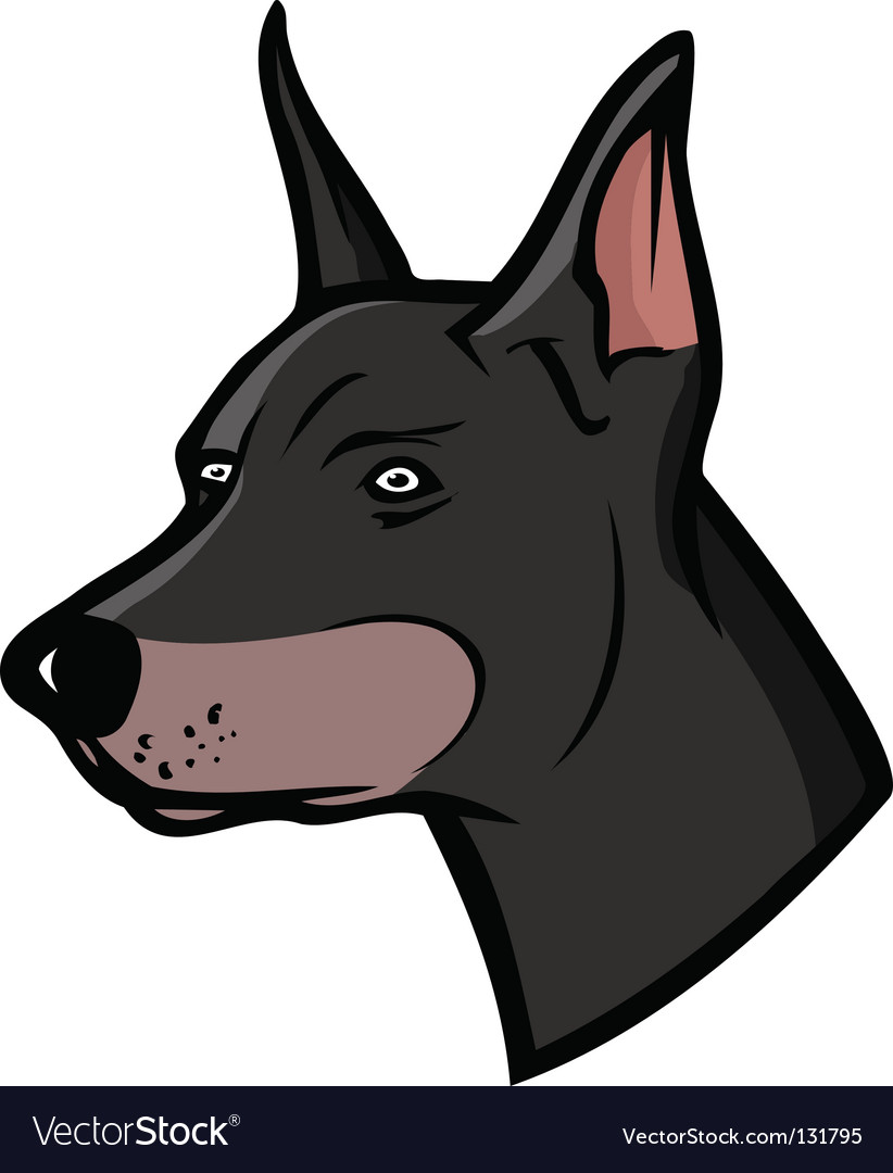 Doberman vector | Price: 1 Credit (USD $1)
