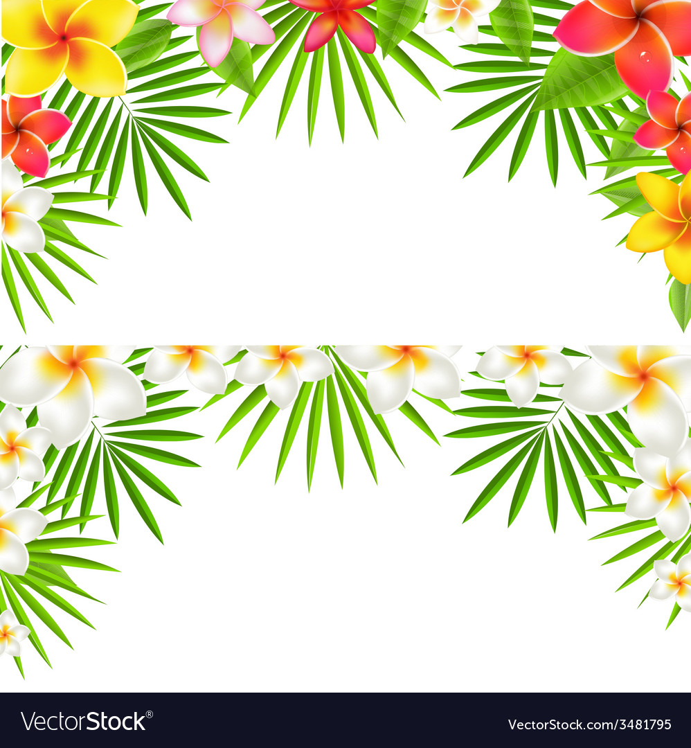 Tropical flowers border set vector | Price: 1 Credit (USD $1)