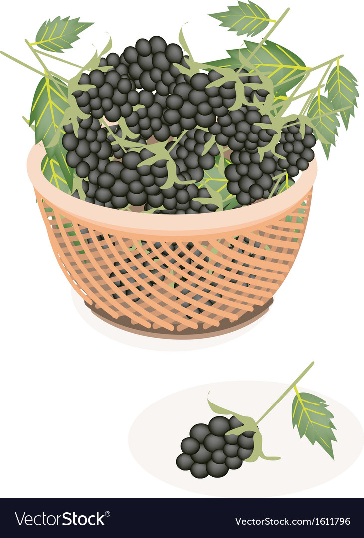 A brown basket of delicious fresh blackberries vector | Price: 1 Credit (USD $1)