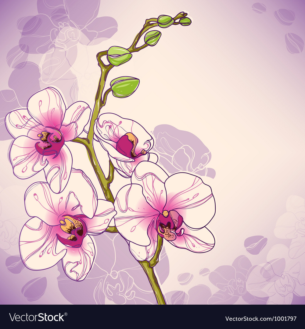 Branch of orchids vector | Price: 1 Credit (USD $1)