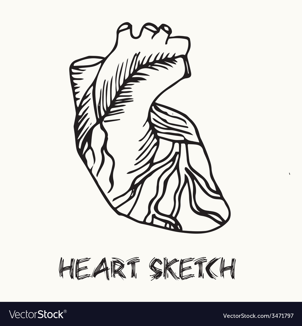Human heart vector | Price: 1 Credit (USD $1)