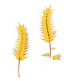 Ripe wheat vector
