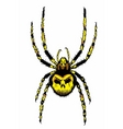 Spider with skull on the body vector