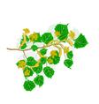 Linden twig vector