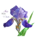 Iris watercolor 4 vector