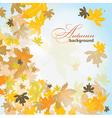 Maple autumn background vector