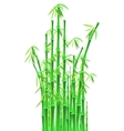 Bamboo sticks over white background vector
