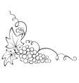 Design element - grapevine vector