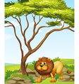 A lion near a big tree in the hills vector