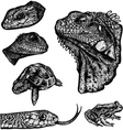 Reptiles - hand drawn vector