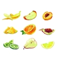 Drawing slices of fruit vector