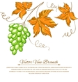 Grapes with autumn leaves around the grapes vector