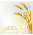 Background with wheat vector