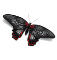 Butterfly papilio rumanzovia isolated on white vector