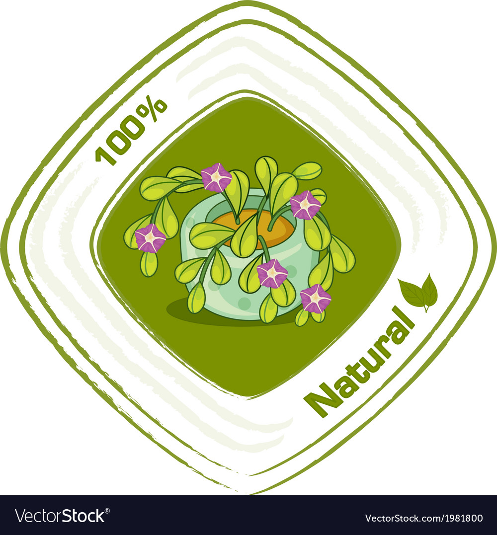 A plant with a natural label vector | Price: 1 Credit (USD $1)