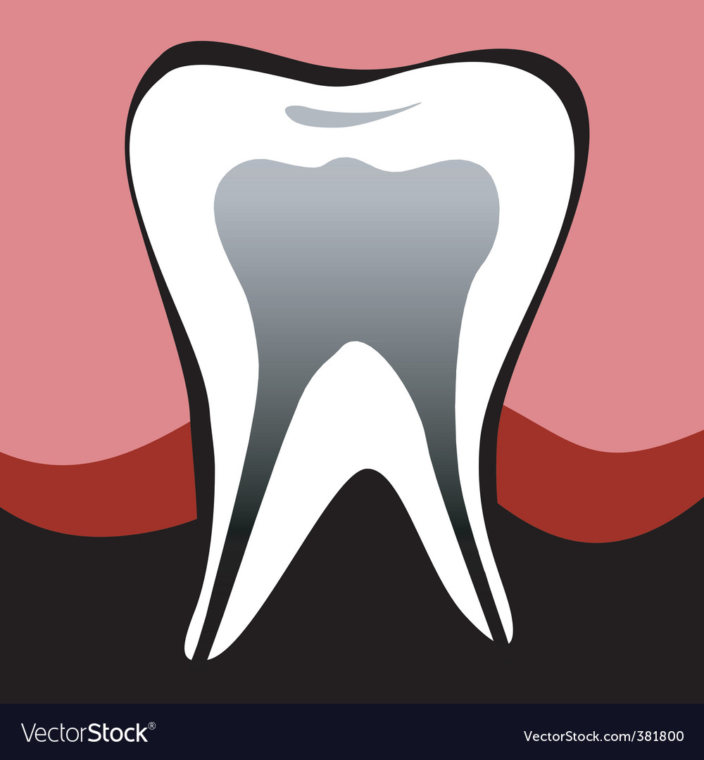 Molar tooth vector | Price: 1 Credit (USD $1)