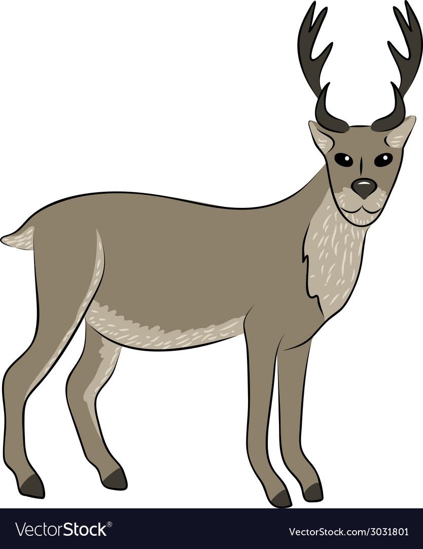 Young wild deer vector | Price: 1 Credit (USD $1)