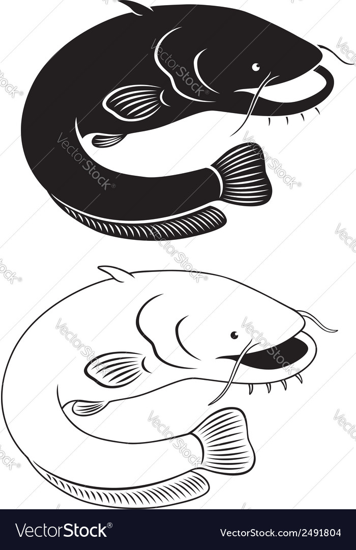 Catfish vector | Price: 1 Credit (USD $1)