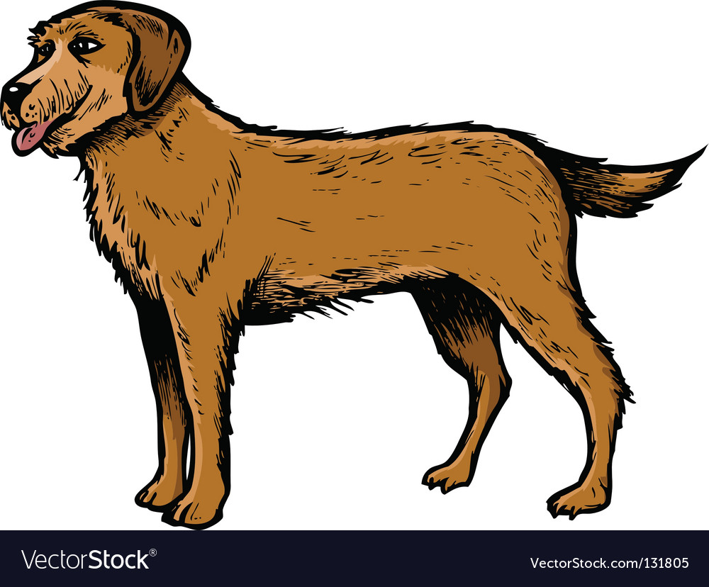 English setter vector | Price: 1 Credit (USD $1)