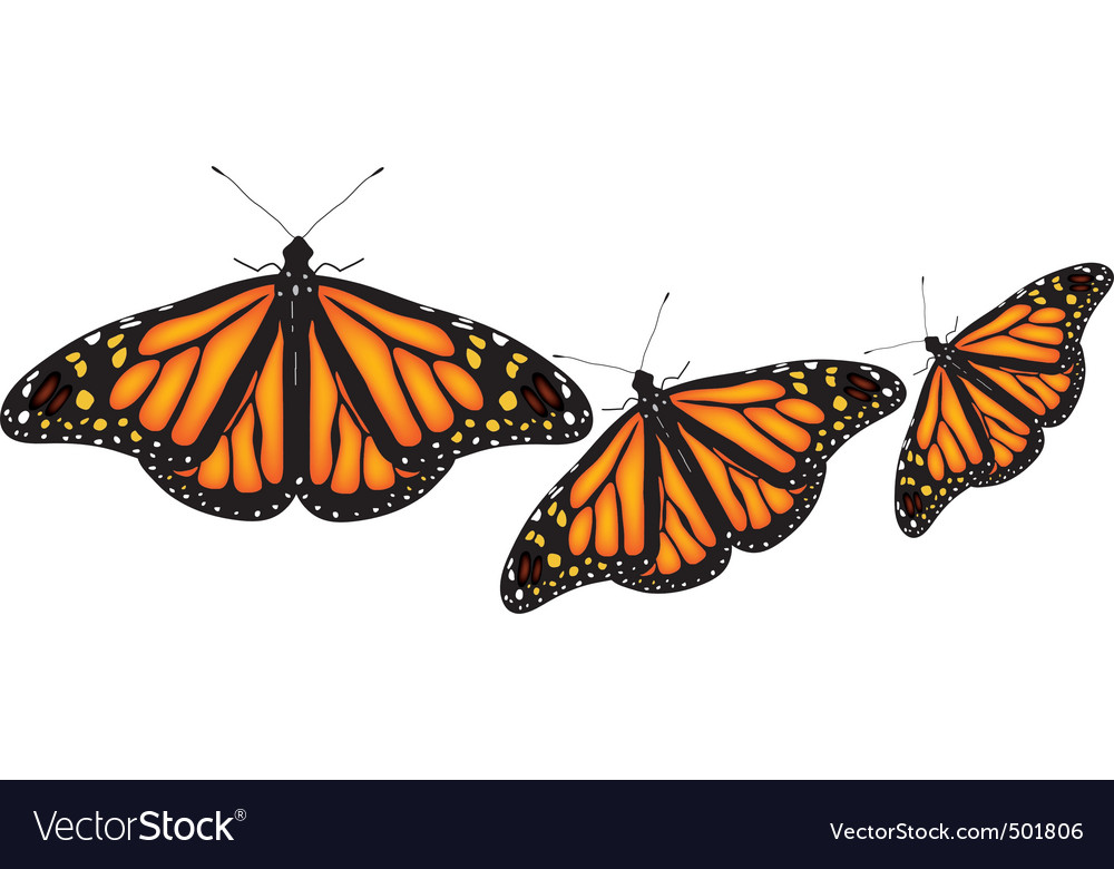Colorful butterflies on white background vector | Price: 1 Credit (USD $1)
