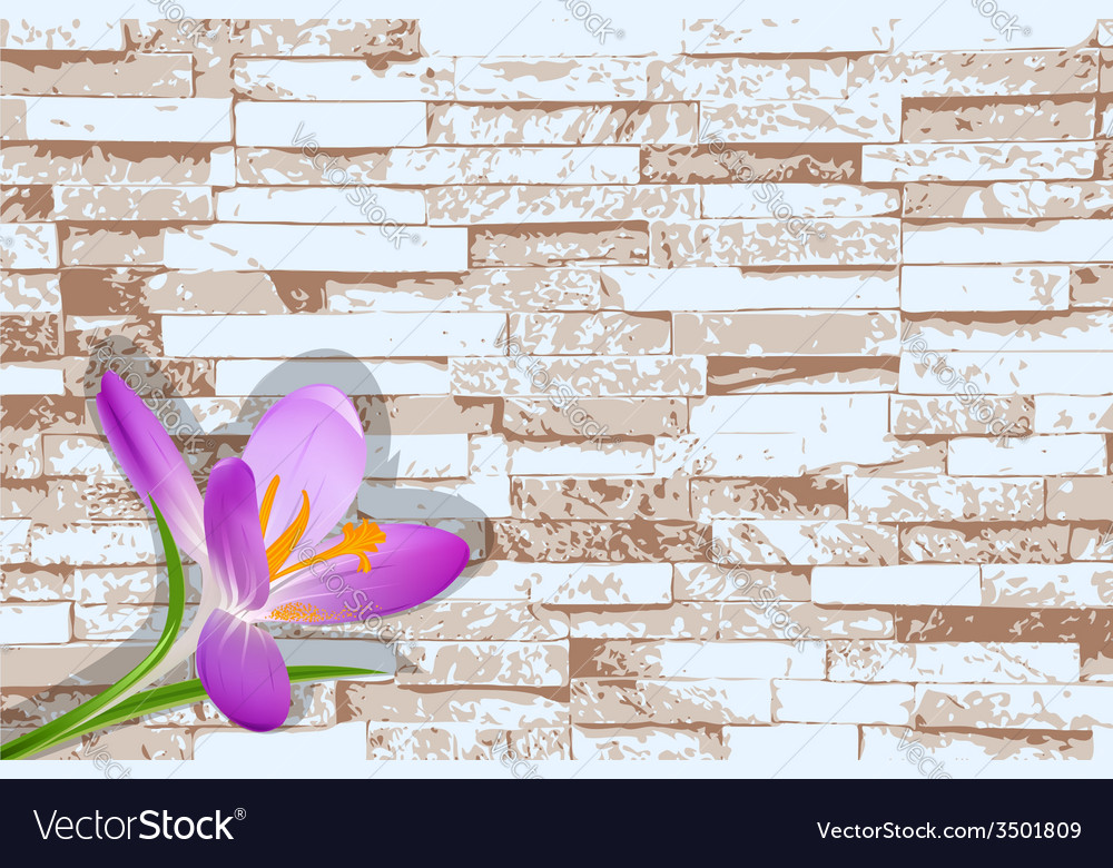 Blooming crocus on a background of a brick wall vector | Price: 1 Credit (USD $1)