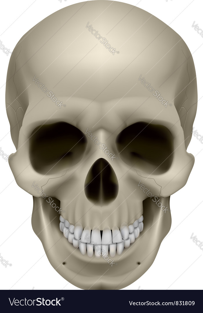Human skull front view digital on white vector | Price: 1 Credit (USD $1)