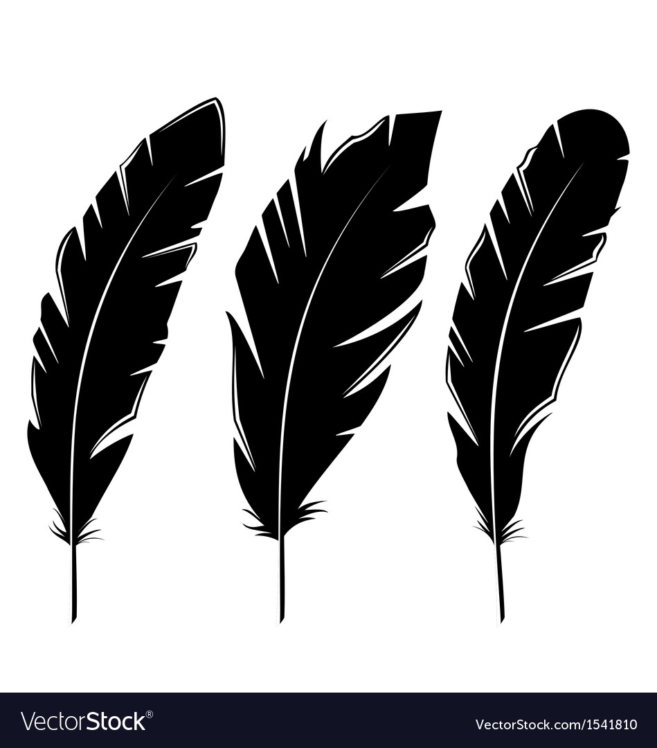 Set feathers isolated on white background vector | Price: 1 Credit (USD $1)