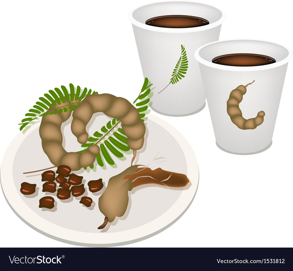 Hot coffee with tamarind pod and leaves vector | Price: 1 Credit (USD $1)