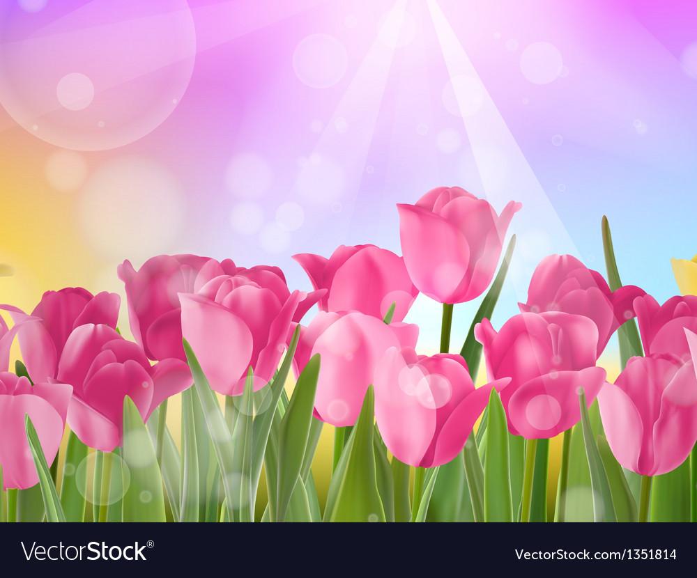 Tulips growing in garden on bokeh eps 10 vector | Price: 1 Credit (USD $1)