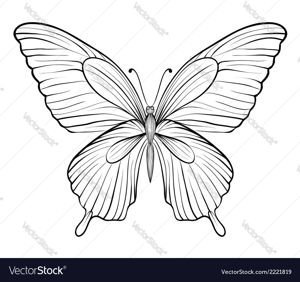 Graphic black and white butterfly vector | Price: 1 Credit (USD $1)