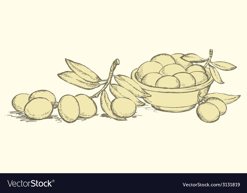 Ripe olives with leaves vector | Price: 1 Credit (USD $1)