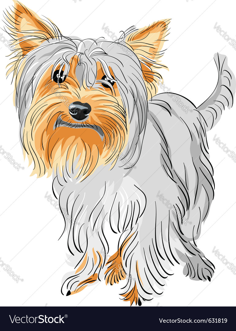 Yorkshire terrier sketch vector | Price: 1 Credit (USD $1)